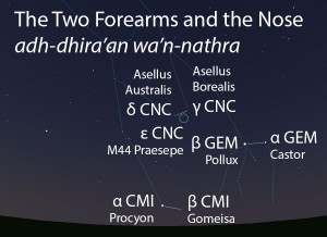 The Two Forearms and the Nose (adh-dhira'an wa'n-nathra) as they appear setting in the west about 45 minutes before sunrise in early January.