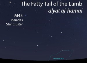 The Fatty Tail of the Lamb (alyat al-hamal) as it appears in the west about 45 minutes before sunrise in mid-November.