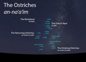 The Ostriches (an-na'a'im) as they appear setting in the west about 45 minutes before sunrise in late June.