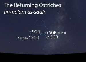The Returning Ostriches (an-na'am as-sadir) as they appear in the west about 45 minutes before sunrise in late June.