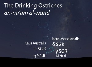 The Drinking Ostriches (an-na'am al-warid) as they appear setting in the west about 45 minutes before sunrise in late June.