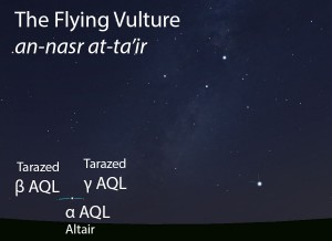 The Flying Vulture (an-nasr at-ta'ir) as it appears setting in the west about 45 minutes before sunrise in mid-August.