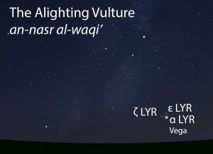 The Alighting Vulture (an-nasr al-waqi') as it appears setting in the west about 45 minutes before sunrise in mid-August.