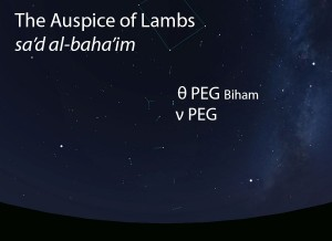 The Auspice of Lambs (sa'd al-baha'im) as it appears in the west about 45 minutes before sunrise in early August.