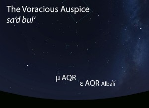 The Voracious Auspice (sa'd bul') as it appears in the west about 45 minutes before sunrise in early August.