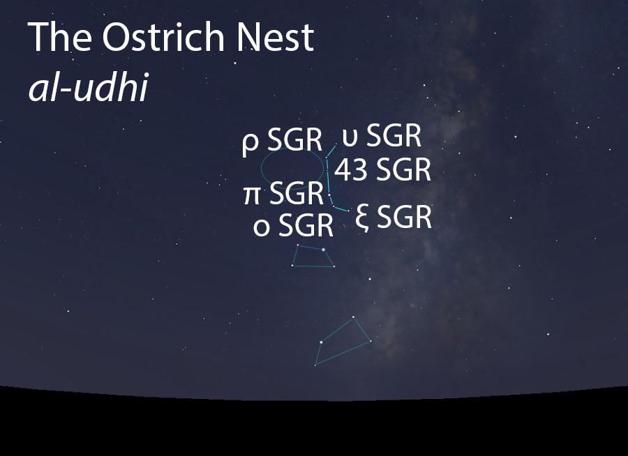 The Ostrich Nest